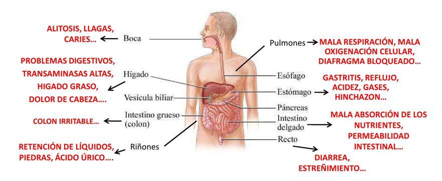 Mi sistema digestivo | Vitamsana
